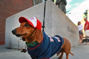 11 reasons to be optimistic about Boston right now